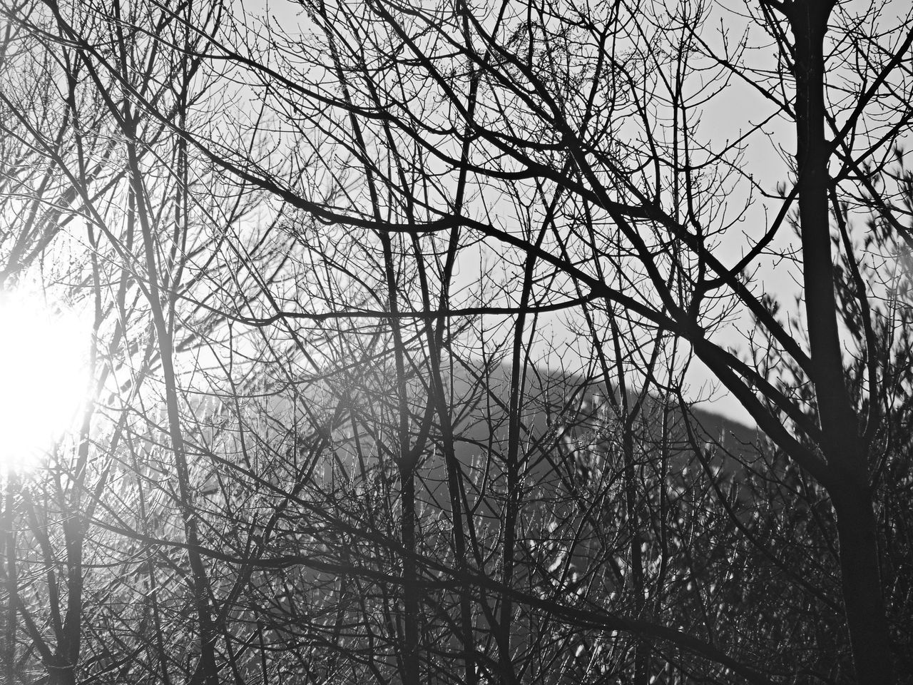 Bare Trees On Sunny Day