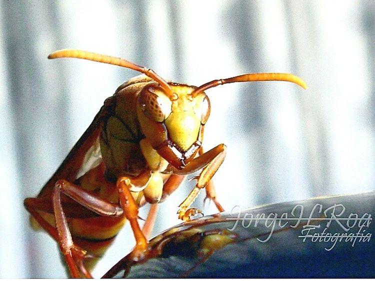 Insect Photography Insect Photo Insect Macro  Jilroa Panasonic Dmc Lz40 The Street Photographer - 2017 EyeEm Awards