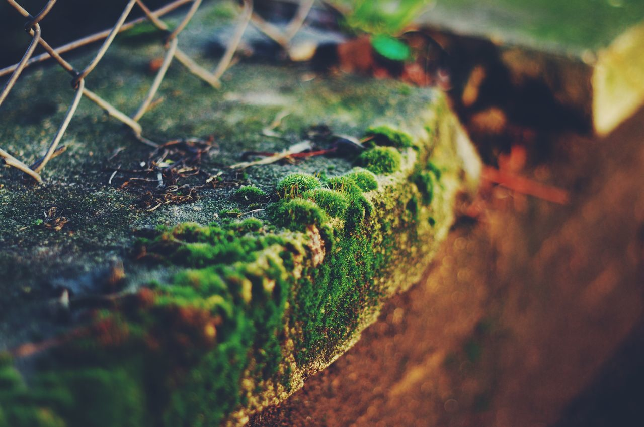 nature, no people, selective focus, close-up, outdoors, day, high angle view, green color, moss, growth, beauty in nature, freshness