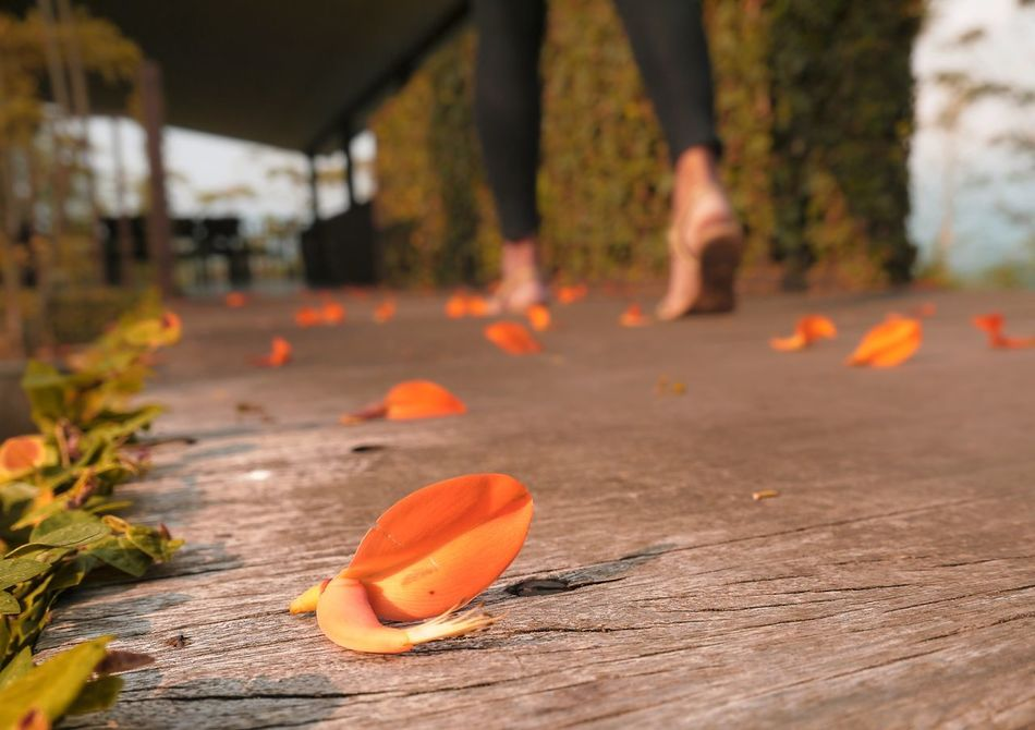 Beautiful stock photos of floor, Beauty In Nature, Flower, Focus On Foreground, Freshness