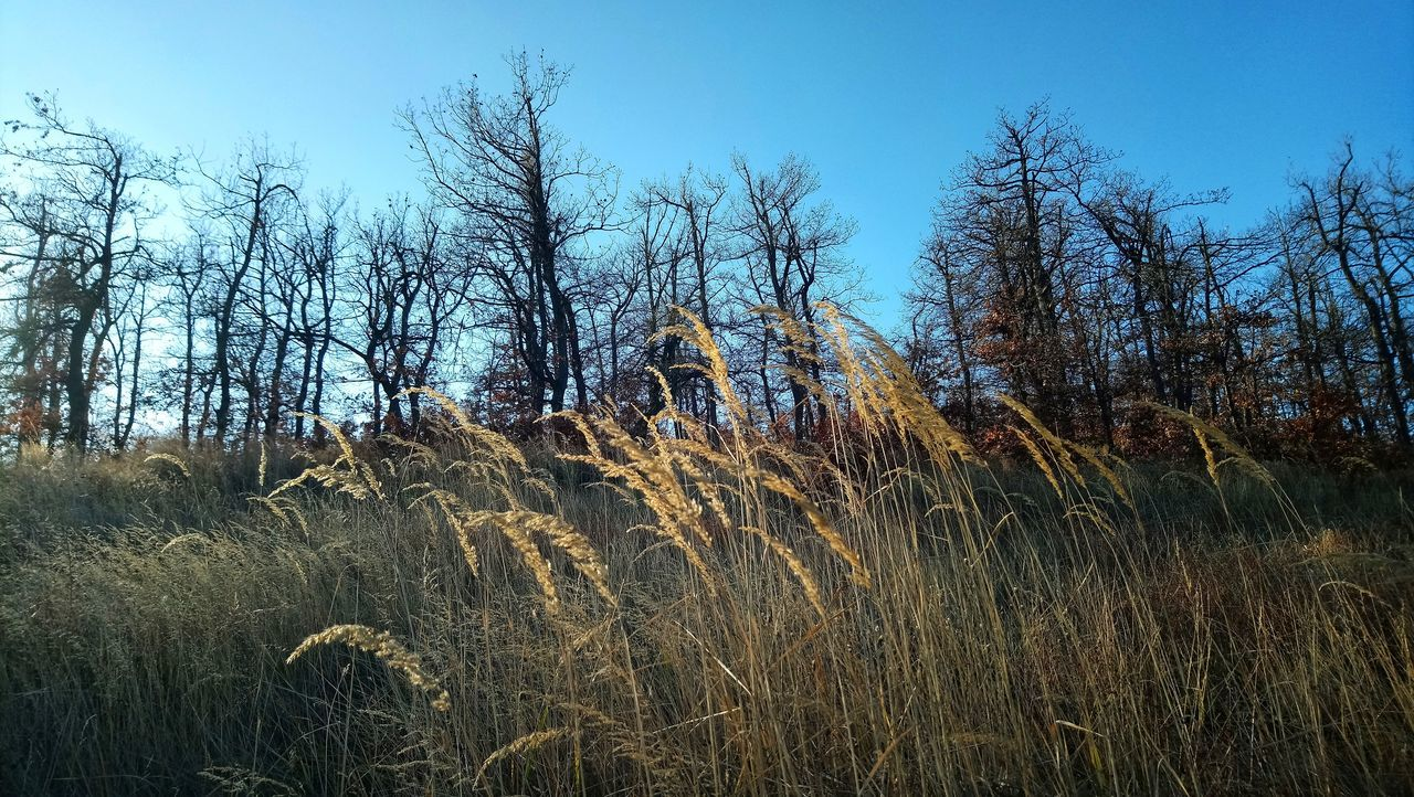 Grass Weet Weet And Trees Grass Grass And Sky Grass Photography Grass And Trees Trikolore Sky And Trees Low Angle View Day Sky Outdoors No People Backgrounds Nature Tree