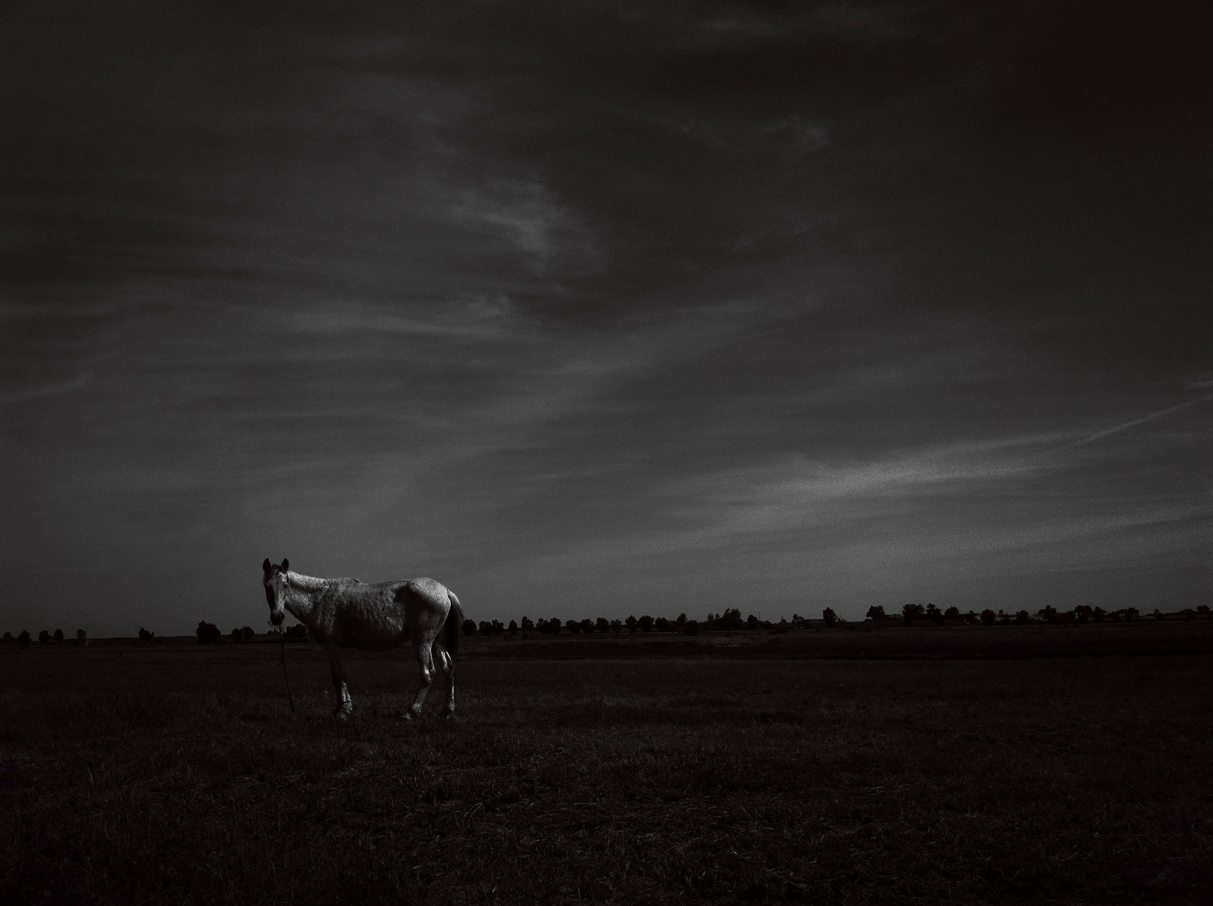 animal themes, domestic animals, mammal, one animal, sky, field, horse, landscape, livestock, full length, pets, cloud - sky, two animals, nature, dog, tranquility, side view, standing, silhouette, tranquil scene