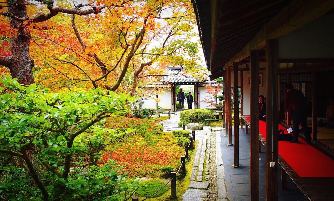 圓光寺 洛北 京都 Kyoto Autumn Colors Autumn Autumn Leaves 2015  Beauty In Nature Travel Destinations Hello World Enjoying Life Relaxing Kyoto, Japan Kyototrip Kyoto Autumn