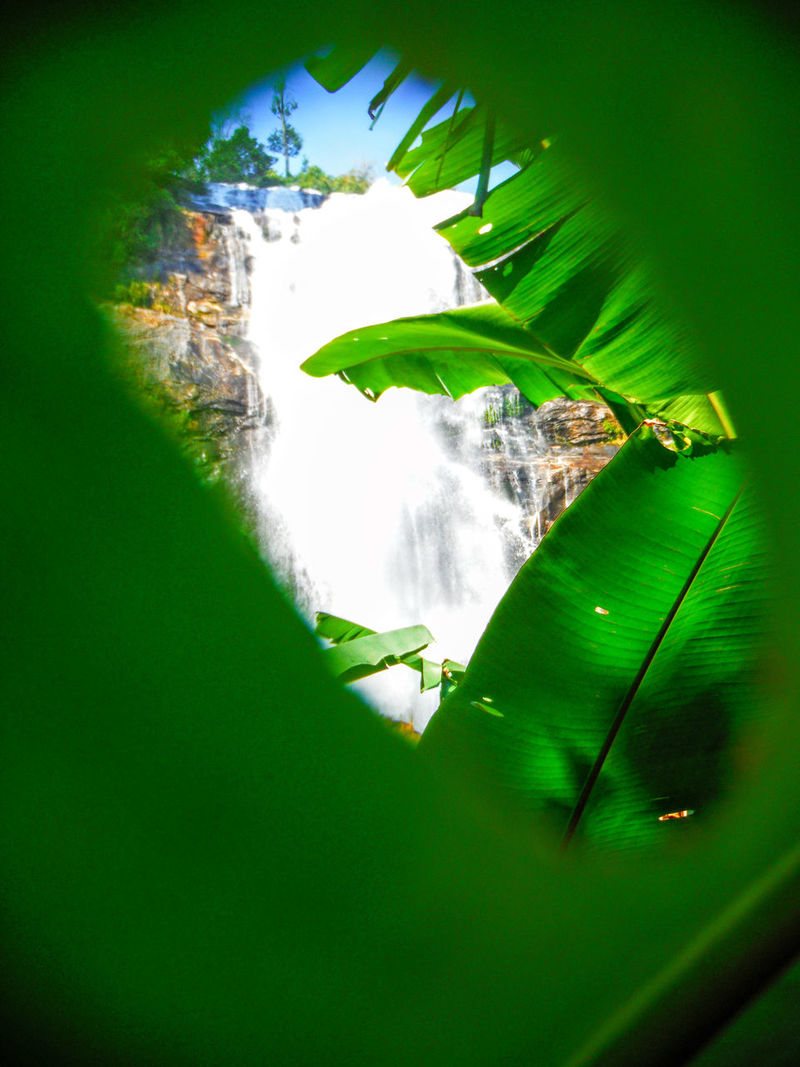 I spy something with my little eye that's a Big Waterfall Different Perspective Peephole Through A Leaf Up Close And Personal With Nature Leaf Peeping Holes In Leaf Waterfall Waterfall_collection Waterfallporn Nature Photography Chiang Mai Chiang Mai | Thailand Thailand Different Point Of View Natural Light Abstract Nature Wachiratan Wachirathan Falls Wachirathan Jungle Waterfall In The Jungle Jungle Trekking EyeEm Thailand Chiangmai Thailand