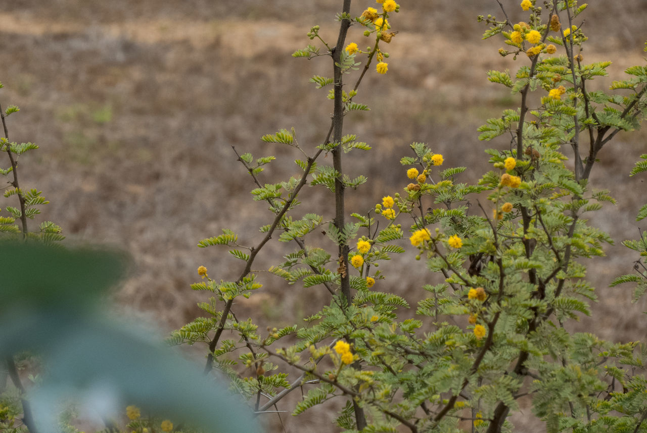 Camera: Canon PowerShot SX50 Adventure Beauty In Nature Close-up Day Field Flower Fragility Freshness Green Growth Nature No People Outdoors Outside Plant Today Tree Wild Yellow Zoom