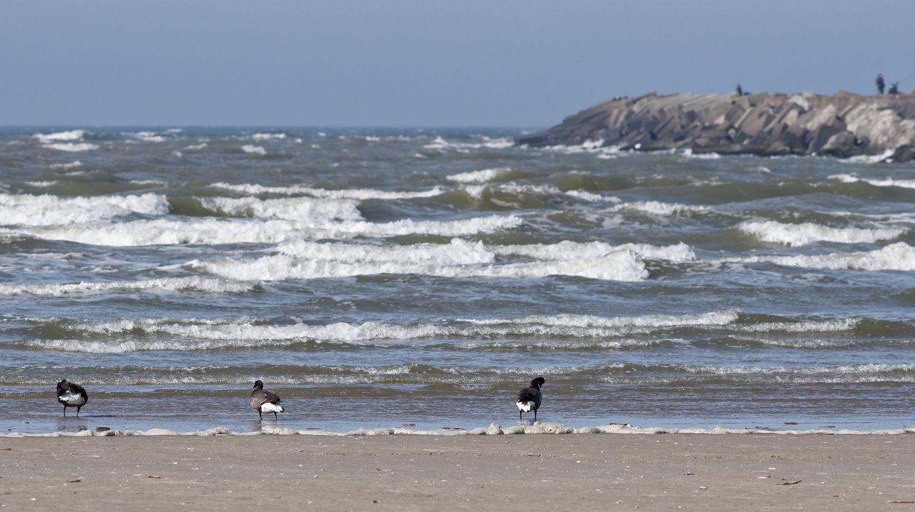 Sneaking upto Geese At The Beach Skinny Dip>>> Spring2015 Seascape Pier IJmuiden