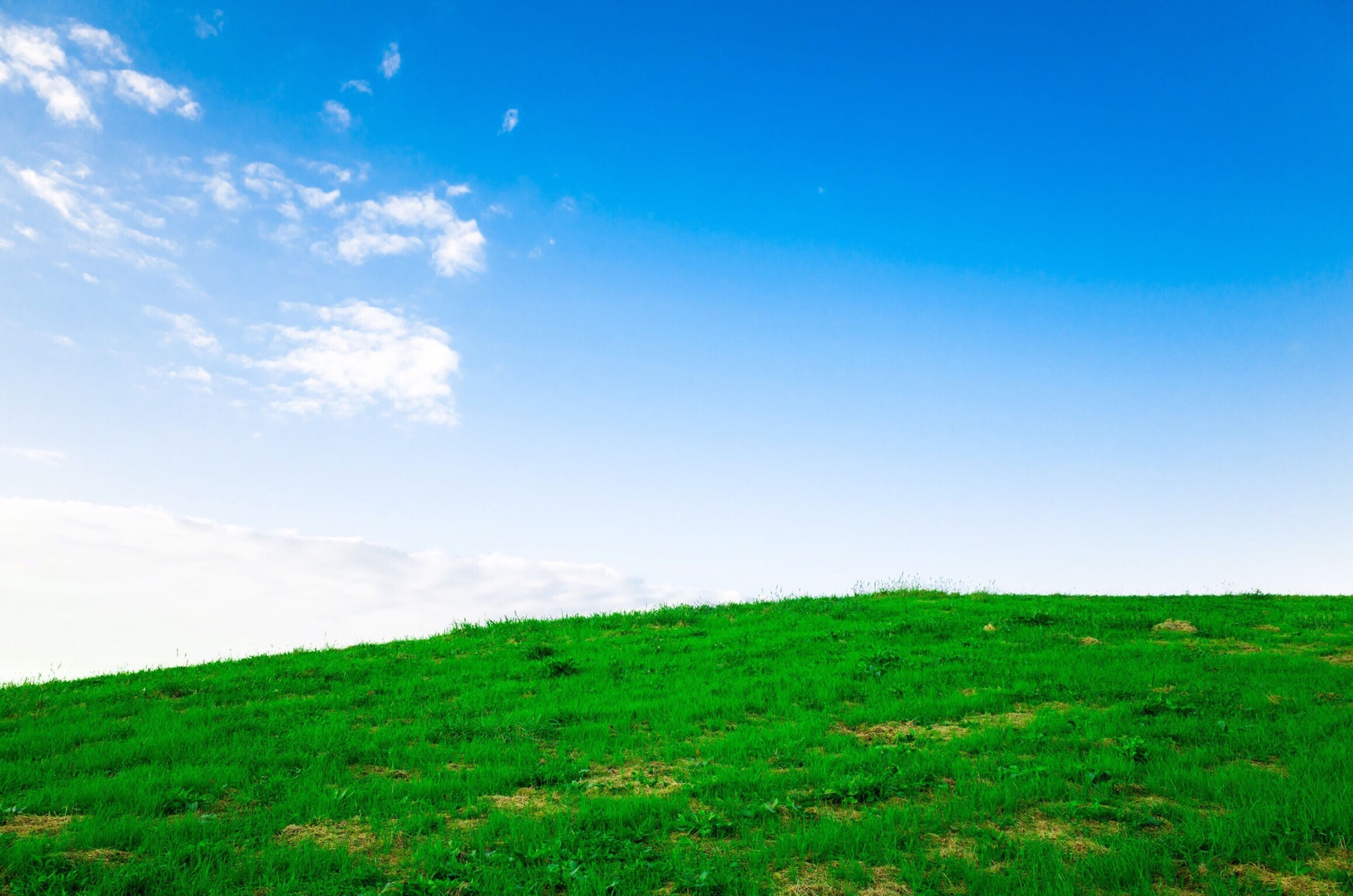 grass, blue, landscape, field, tranquility, tranquil scene, grassy, sky, scenics, beauty in nature, green color, nature, clear sky, copy space, horizon over land, non-urban scene, growth, day, remote, green