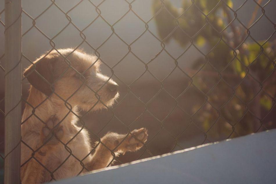 VSCO Vscocam Igers Dog