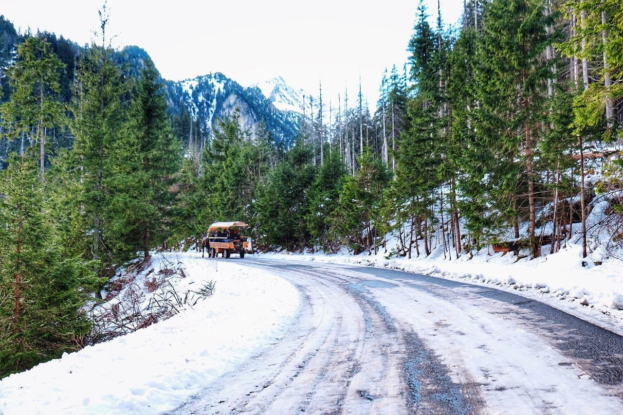 Snow Cold Temperature Winter Tree Nature Scenics Weather The Way Forward Transportation Beauty In Nature Covering Landscape Tranquility Forest Tranquil Scene Outdoors Mountain Road Morskieoko Zakopane Poland Polska Europe Eurotrip