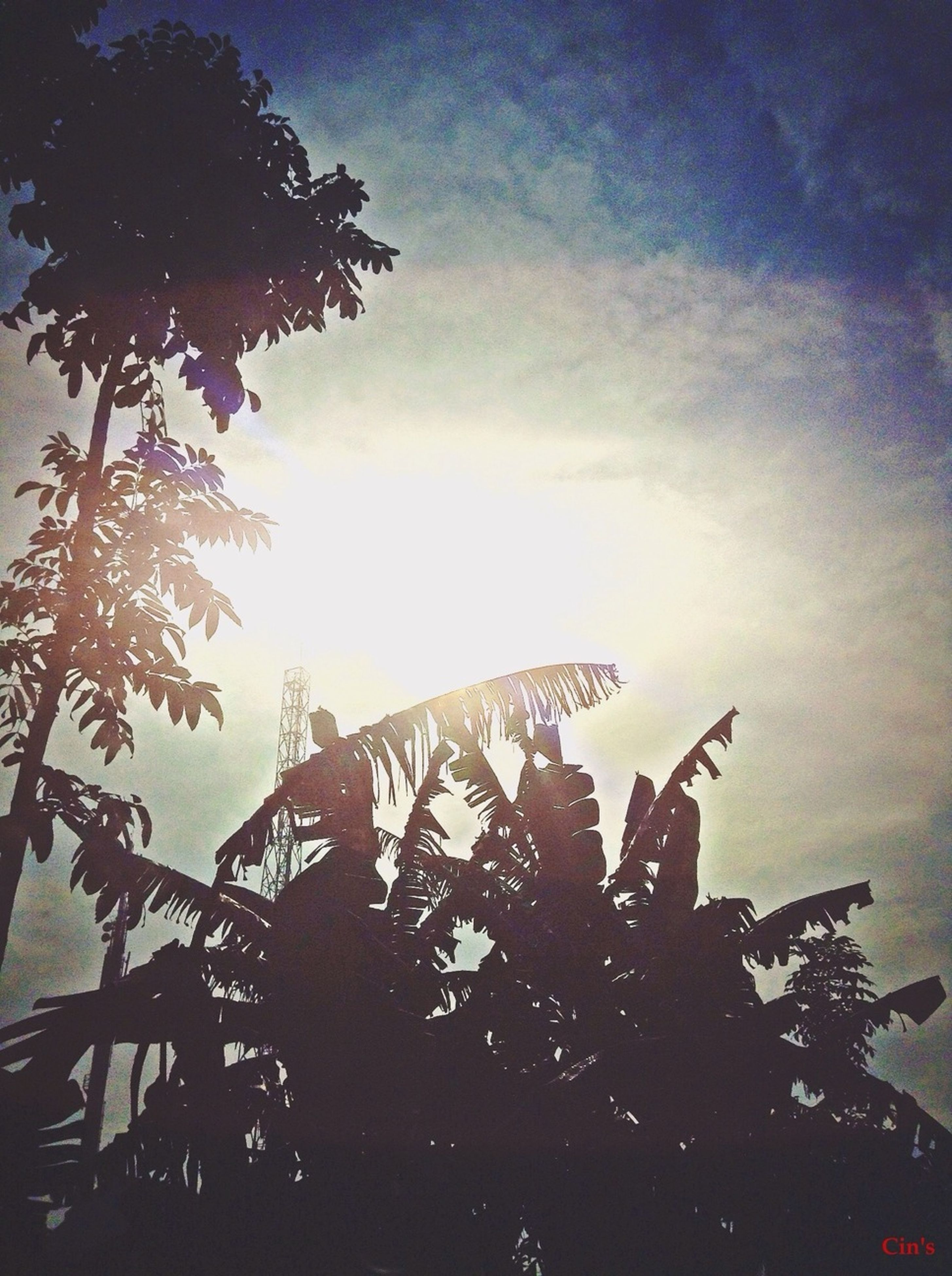 low angle view, sky, tree, built structure, architecture, building exterior, silhouette, sun, sunset, sunlight, cloud - sky, nature, branch, growth, outdoors, no people, dusk, sunbeam, day, lens flare
