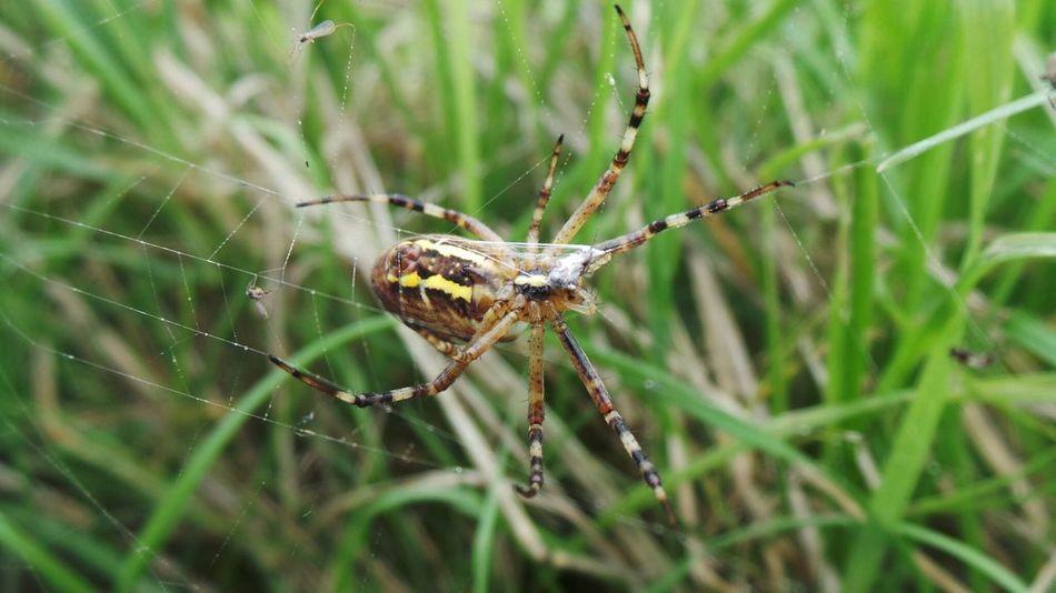 Beautiful stock photos of spider's, Animal Behavior, Animal Leg, Animal Themes, Animals In The Wild