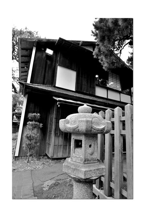 Japanese Tea Garden _ Monochromatic 7 Golden Gate Park San Francisco, Ca. The Oldest Public Japanese Tea Garden In U.S. Built In 1894 For World's Fair 5 Acres Makoto Hagiwara : Caretaker 1895-1925 Japanese Latern Fence Low Angle View Garden Garden_lovers Garden_collection Landscape Garden Photography Landscape_Collection Landscape_lovers Landscape_photography Black & White Black And White Photography Black And White Black And White Collection  Monochrome