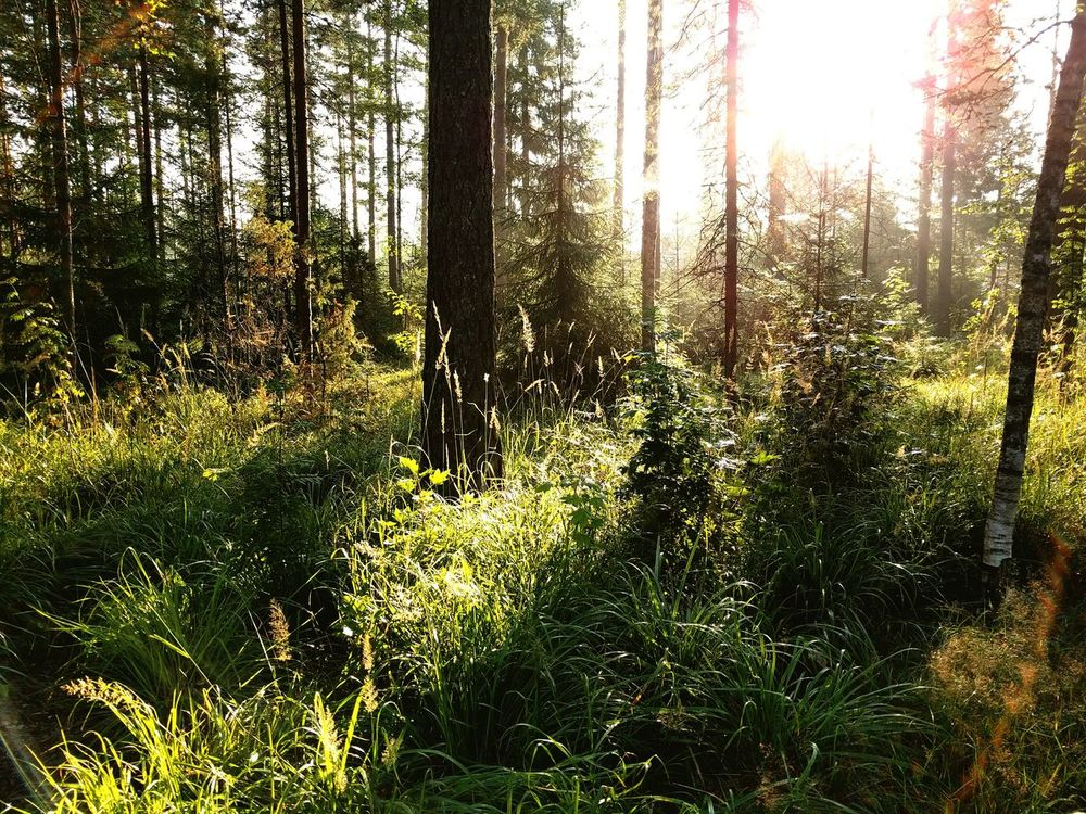 Forest Taking Photos Finland Summer ☀ Hollola