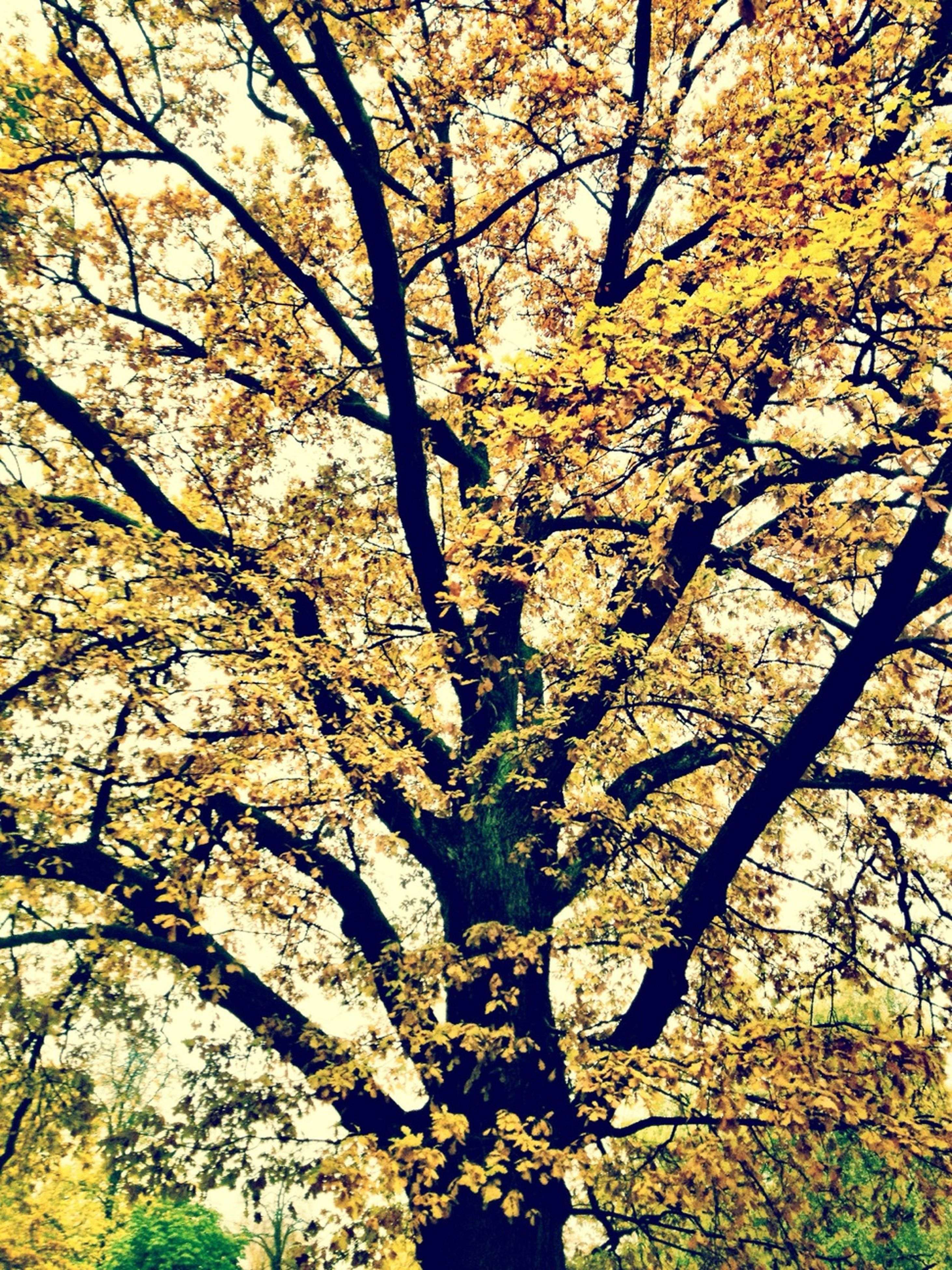 tree, branch, low angle view, growth, autumn, nature, beauty in nature, change, tranquility, yellow, season, tree trunk, scenics, outdoors, full frame, day, no people, backgrounds, leaf, sunlight