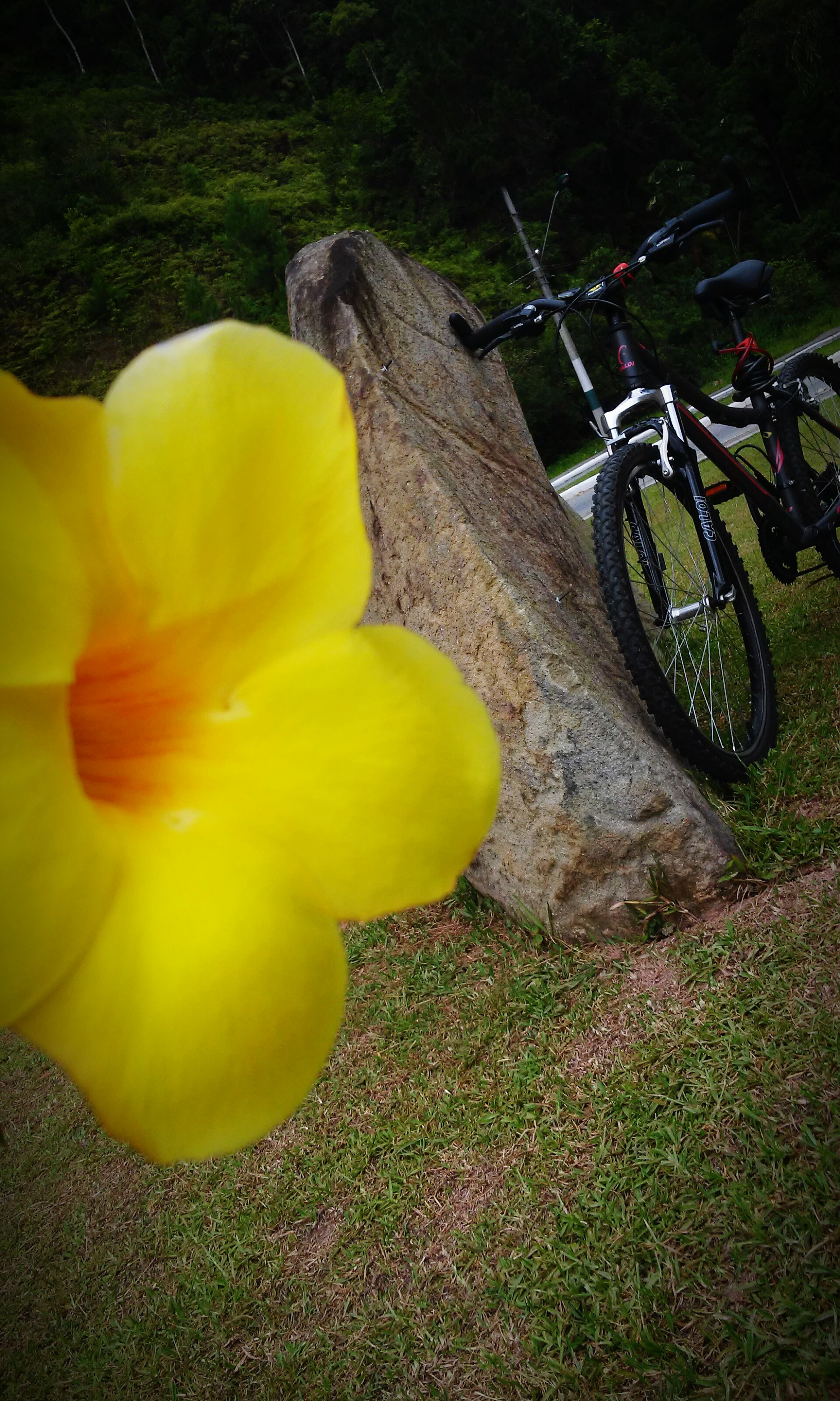 yellow, bicycle, flower, high angle view, plant, sunlight, nature, growth, outdoors, transportation, day, no people, close-up, petal, fragility, park - man made space, beauty in nature, land vehicle, shadow, mode of transport
