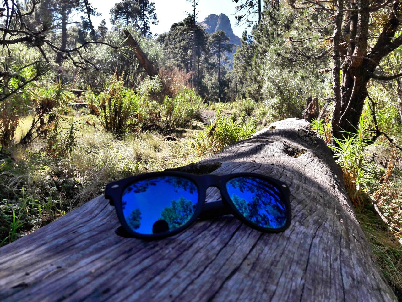 Tree Blue No People Outdoors Growth Day Nature Close-up Fine Art Tranquil Scene Eyem Best Shots Beauty In Nature My Year My View 2016♡ Forest Photography Eyem Best Shots Nature_collection Raiban Sunglasses ✌👌 Sunglasses👓 The Great Outdoors - 2017 EyeEm Awards
