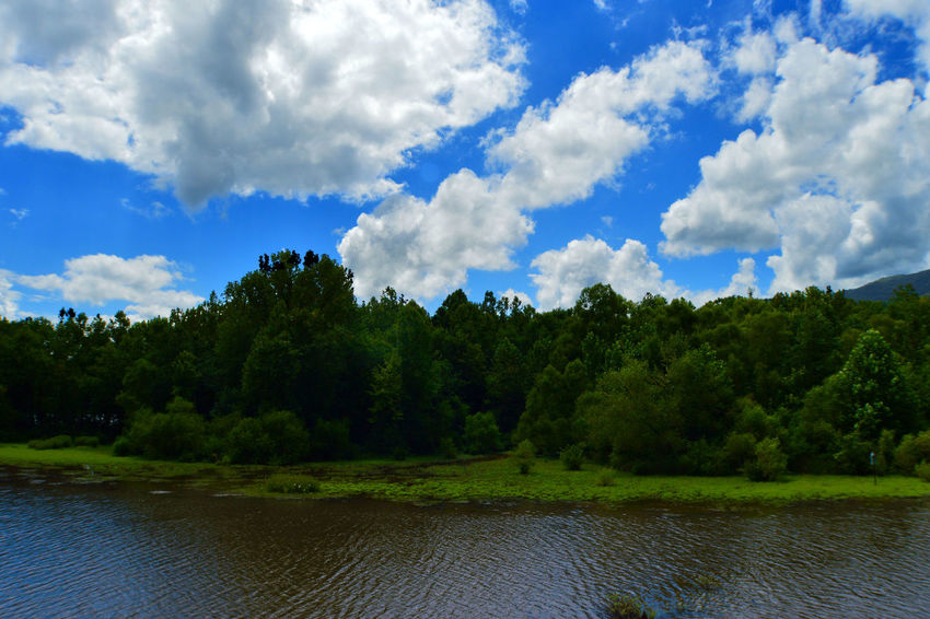 Beauty In Nature Blue Caryville Tennessee Cloud Cloud - Sky Cloudy Cove Lake State Park Day Green Green Color Lake Landscape Lush Foliage Nature No People Outdoors Reflection Reflections Sky Summer 2016☀️☀️ Tranquil Scene Tranquility Tree Water