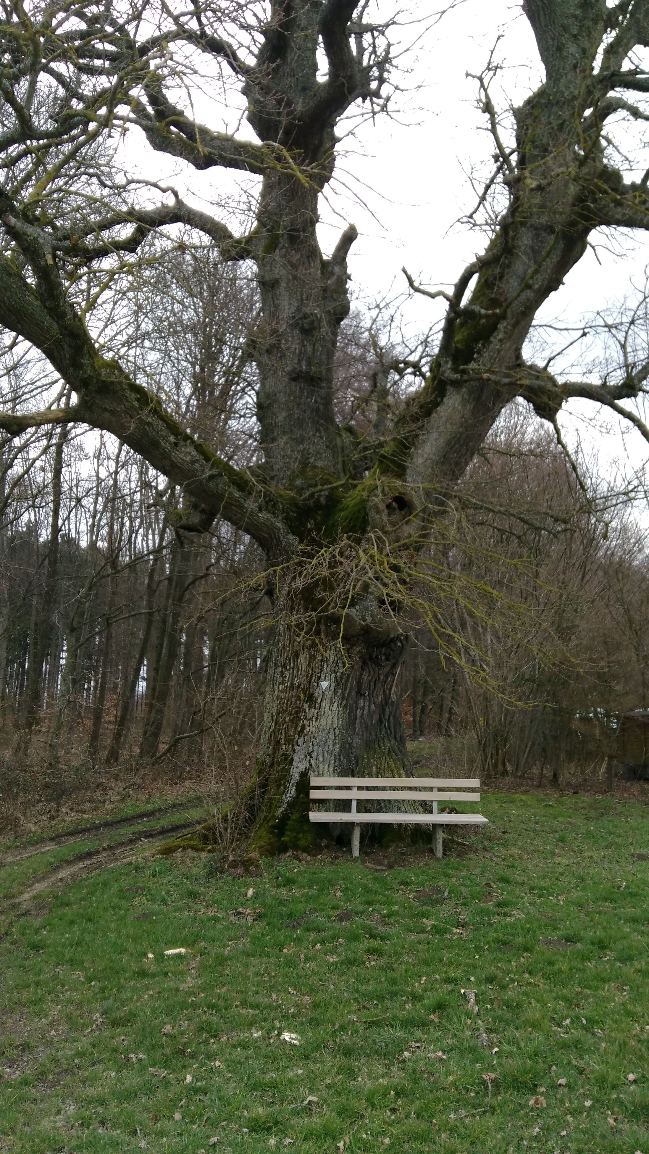 tree, grass, tree trunk, tranquility, growth, tranquil scene, branch, green color, nature, bench, grassy, beauty in nature, scenics, landscape, field, park - man made space, day, outdoors, non-urban scene, forest