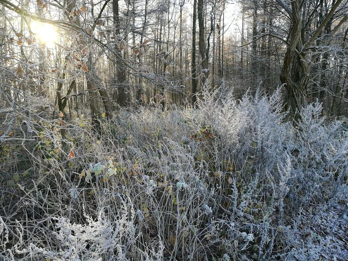 Icy day.. Nature Icy Forest