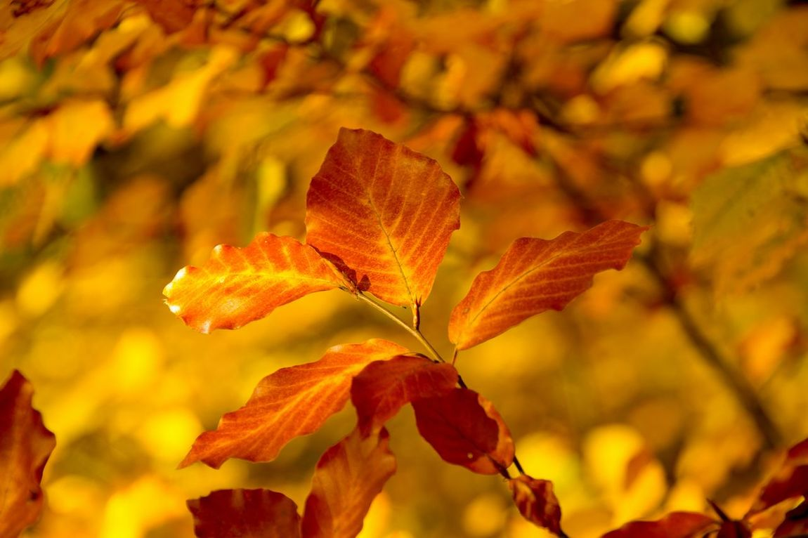 Nature Hessen Colors Of Autumn