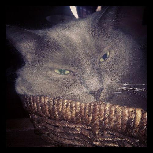 Lazy Cats Toby-Loo Hesmyboy Catsofinstagram Cats Of EyeEm Catsoftheworld