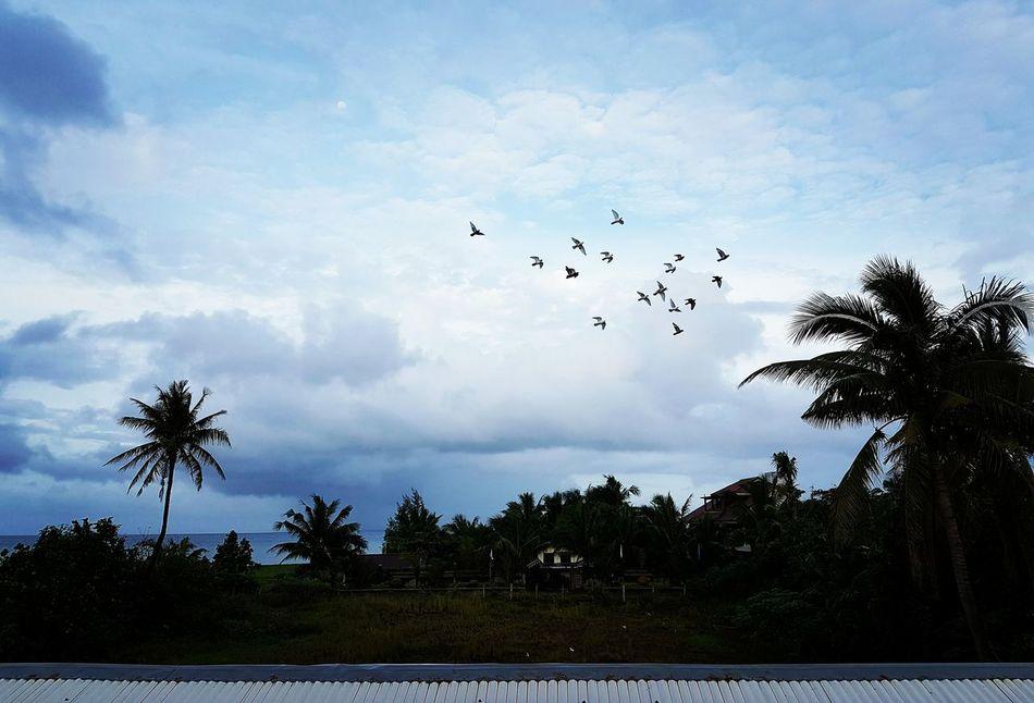 Why do birds suddenly appear? Bird Photography Birds Nature Nature Photography Travel Photography Travelph TravelPhilippines Flock Of Birds No Filter