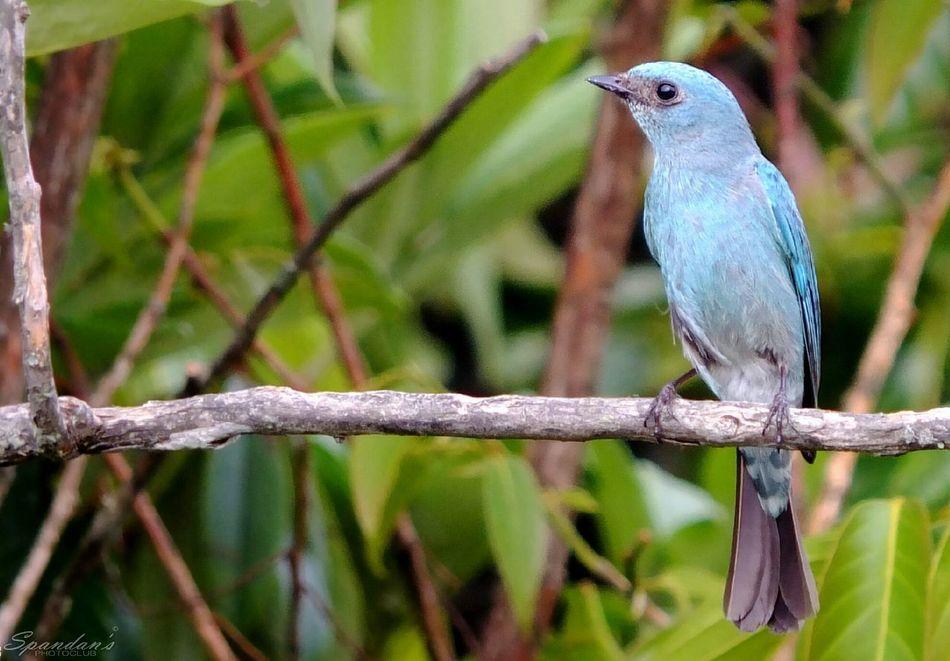 Blue Bird Cute Bird🐥 Colours Blue First Eyeem Photo