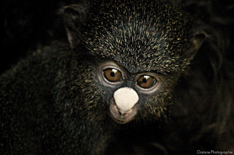 Africa Animals Monkey Eyes
