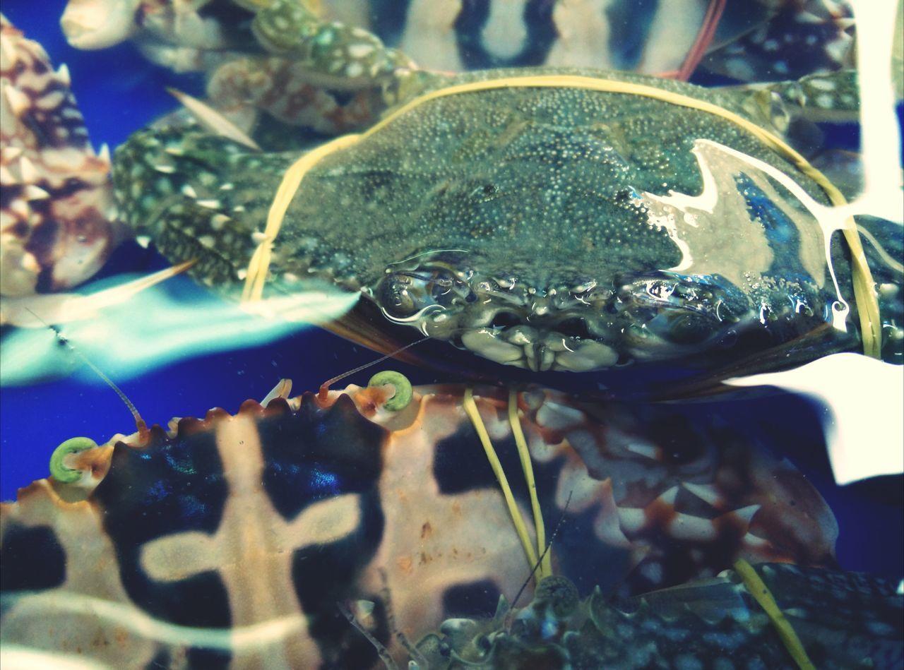 มองหน้าหาเรื่องเหรอเพ่... Holiday♡ Streetphoto Seafood Shopping