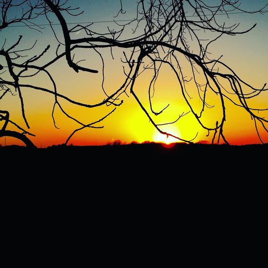 Illinois sunset Sunset Silhouette Tranquil Scene Scenics Beauty In Nature Tranquility Branch Landscape Dark Nature Outline Orange Color Sky Sun Outdoors Remote Vibrant Color Non-urban Scene No People Beauty In Nature Nature Kewanee Illinois