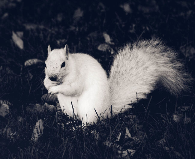 One Animal Animal Wildlife EyeEm Nature Lovers Wildlife & Nature Nature_collection Wildlife Photography Eyeem Animal Best ShotsUrban Nature Urban Wildlife Urban And Nature Monochrome Photography Blackandwhite Photography Albino Squirrel Peace And Tranquility Beauty In Nature EyeEm Animal Lover