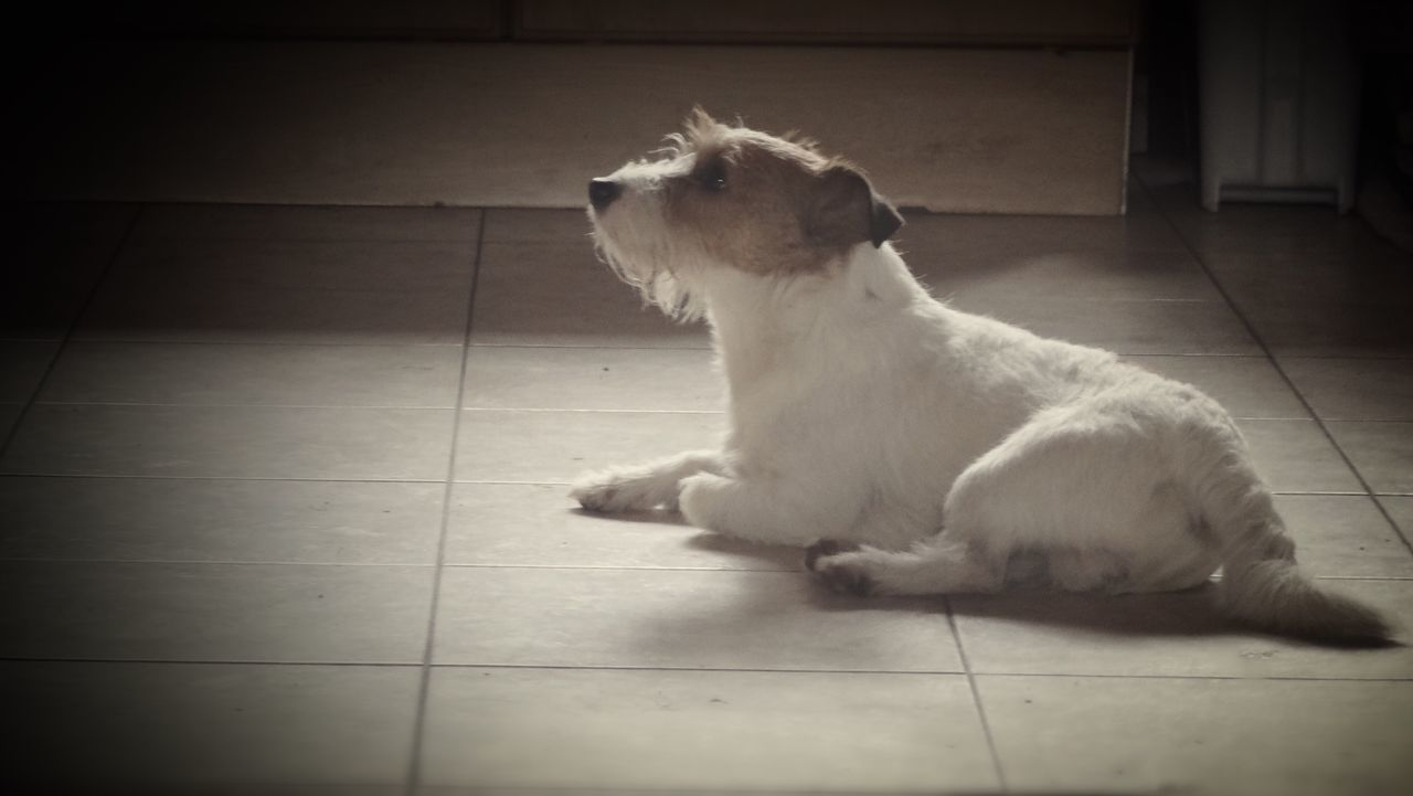 Domestic Animals Pets Dog Mammal One Animal Animal Themes Full Length Indoors  Sitting No People Day Dogs Of EyeEm Dogs Lily May Parker Lily May Collection Lilymayparker.blogspot.be
