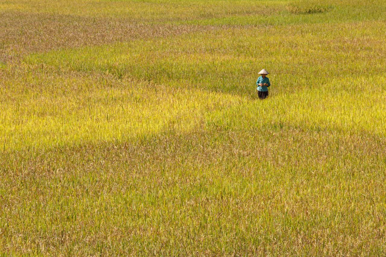 Hoang Su Phi, Ha Giang province, Vietnam - September 27, 2016 : The ethnic woman happily to see her yellow rice fields of preparing harvest at Hoang Su Phi, Ha Giang Province Enjoy Agriculture Asian  Business Climate Colorful Costumes Country Crop  Culture Ecology Ethnic Farm Farmer Field Food Harvest Headdress Horticulture Minority Mountains Traditional Village Woman Yellow