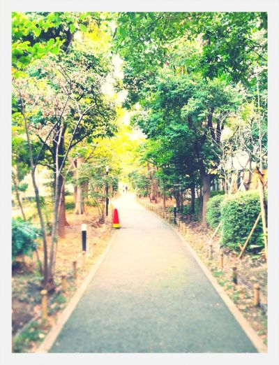 Long way\(^o^)/