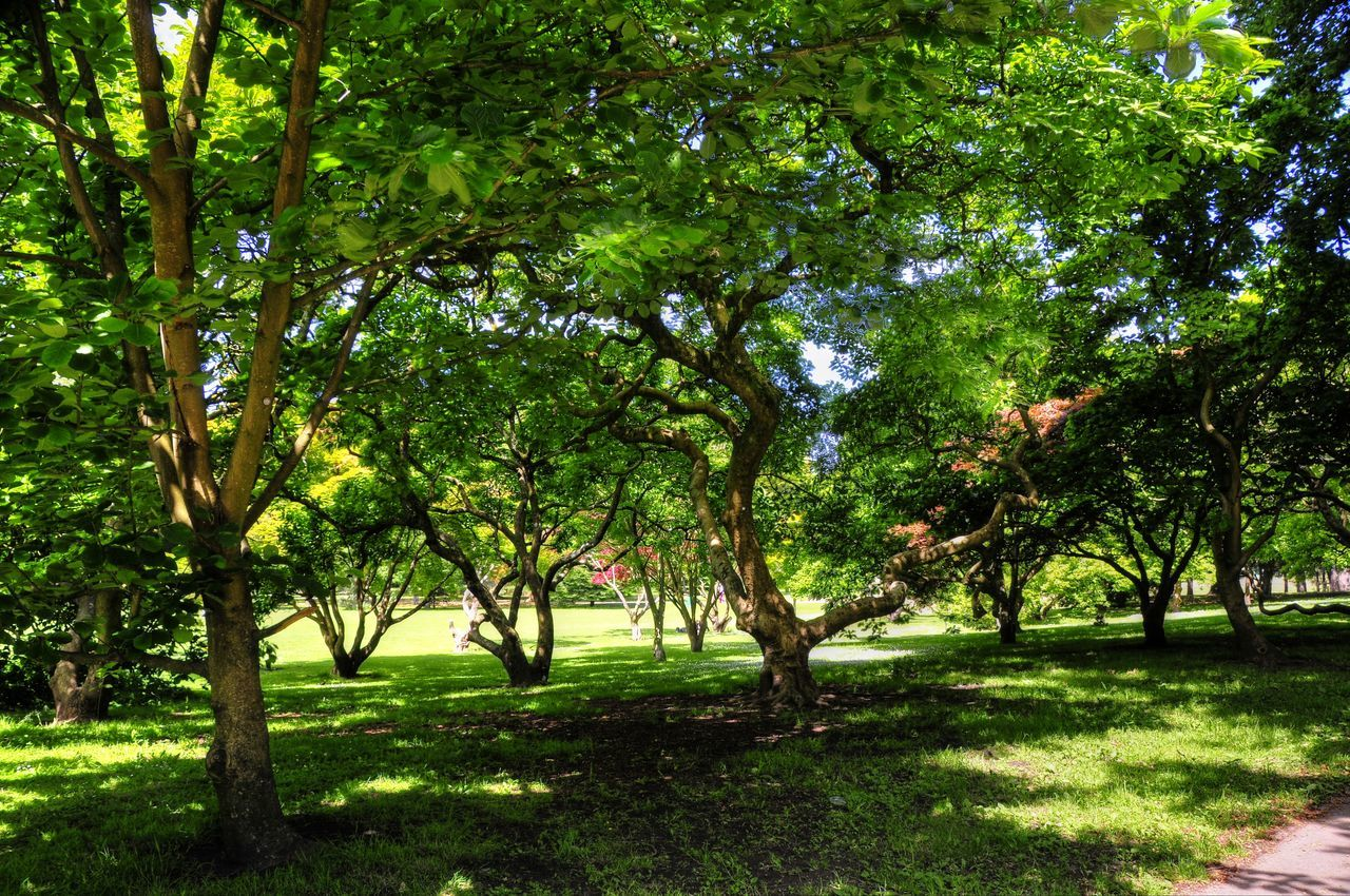 tree, grass, nature, green color, summer, outdoors, landscape, shadow, sunlight, no people, growth, scenics, branch, day, beauty in nature