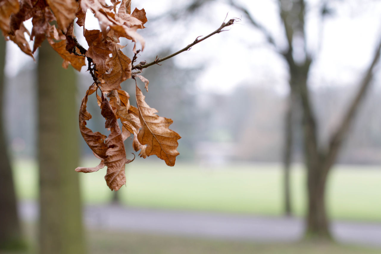 Spring time in the park Autumn Beauty In Nature Branch Branches And Leaves Branches And Sky Brown Leaves Cannon Hill Park Change Change Your Perspective Day Focus On Foreground Fragility Hanging Leaf Leaf In Focus Leaves Light Park No People Outdoors Park Pattern Spring Spring Flowers Tree Trees In Background