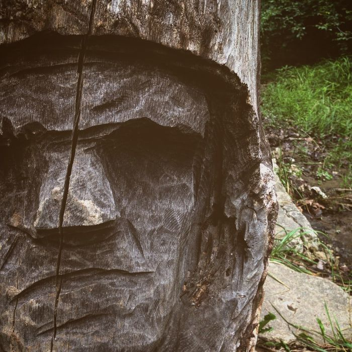 Anthropomorphic Face Close-up Day Forest Frontiersmen Nature No People Outdoors Splitting Splitting Logs Tree Tree Trunk Woodcarving