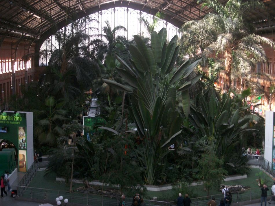 Atocha Train Station Architecture Atocha Built Structure City Day Greenhouse Growth Indoors  Madrid Palm Tree Plant Train Station Tree