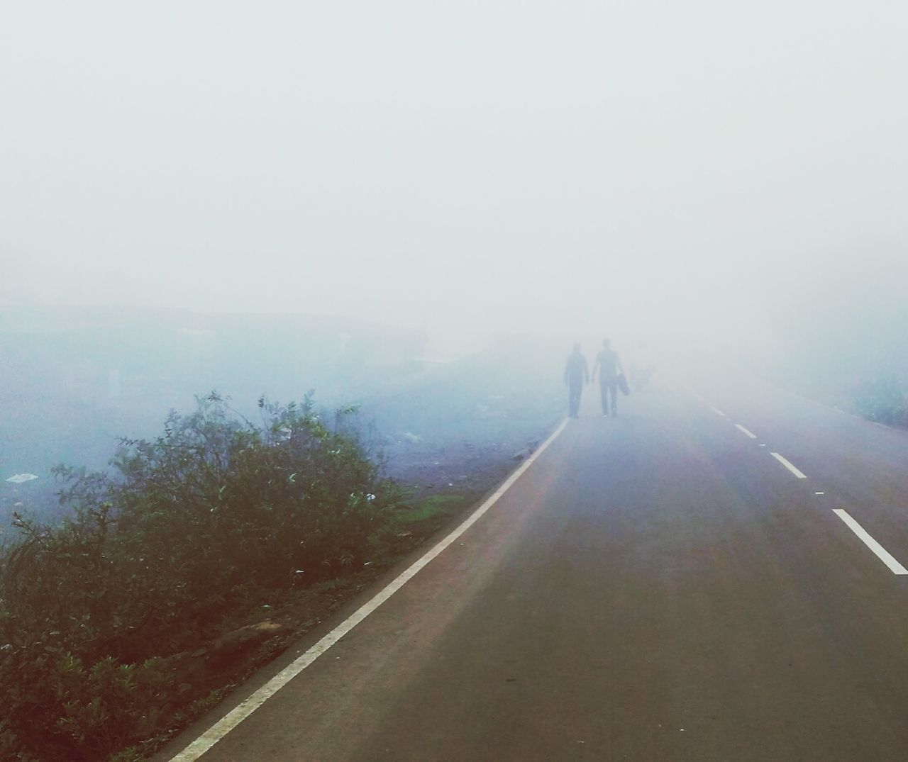 fog, foggy, nature, day, road, mist, landscape, the way forward, walking, real people, outdoors, two people, men, beauty in nature, scenics, full length, hazy, tree, sky, people