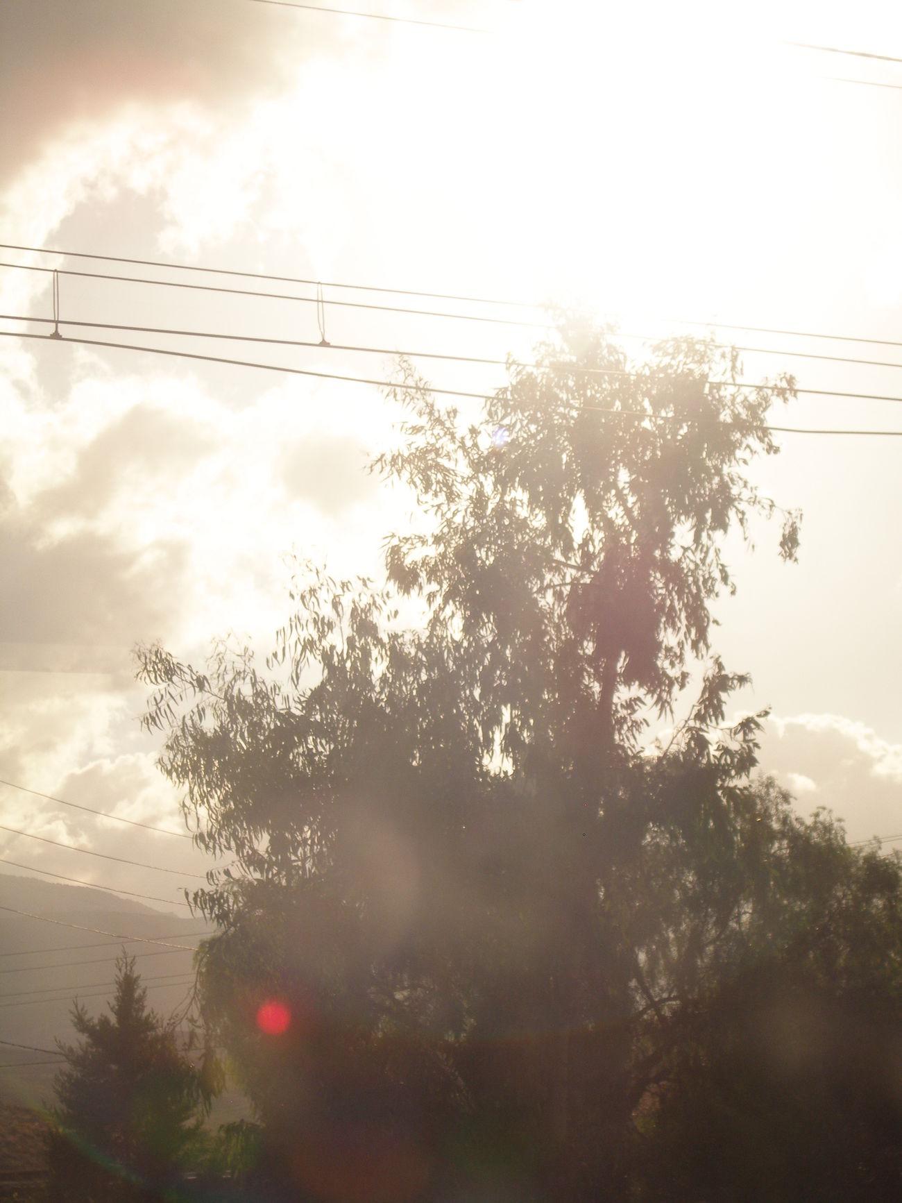 Suena 🎶🎧 Páginas tuyas. Fabián Tree árbol Viajar Travel Train Tren Vistas View Ventana Ventanilla Window Tesis99 White Blanco Luz Light Antenas Tranquilidad Tranquility Trayecto Route Destello Flare Blurred Transport