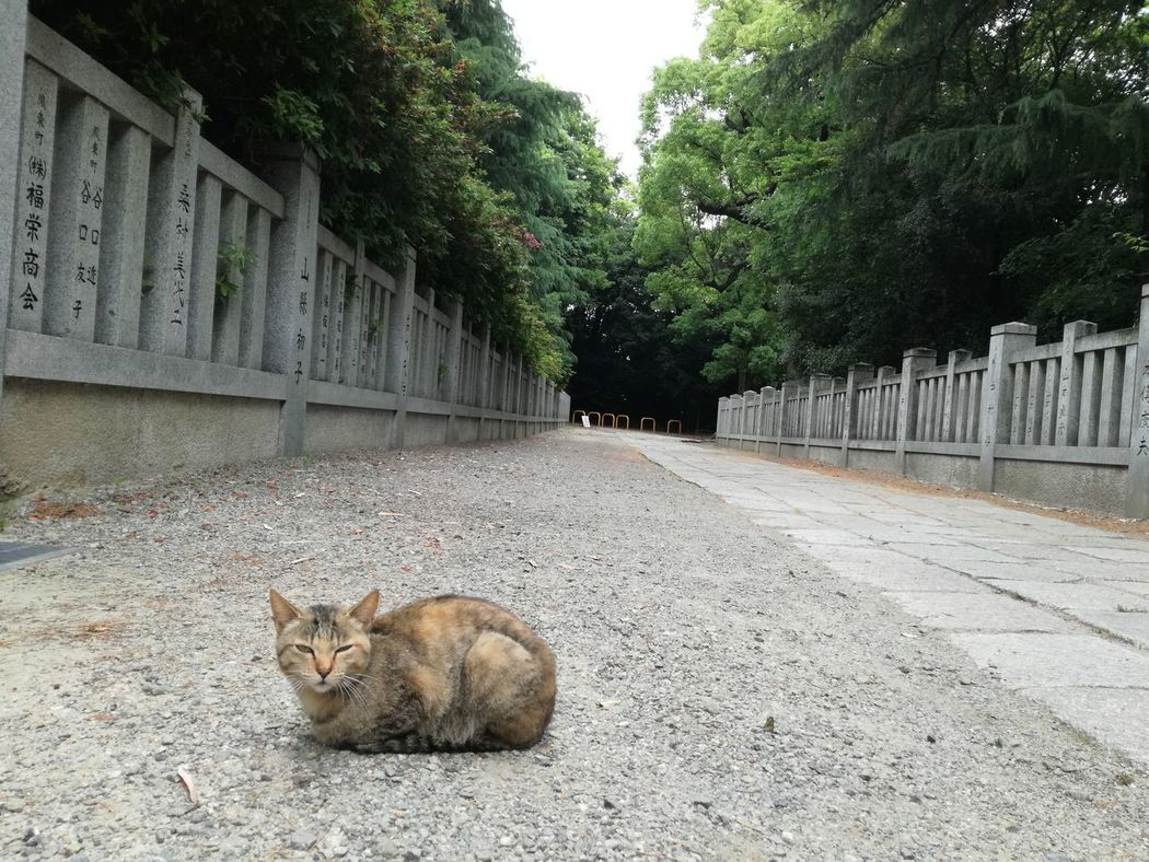 One Animal Animal Themes Mammal Outdoors Day No People Tree Nature Animals In The Wild Japan Photography Japan Japanese Shrine Beauty In Nature Tree Nature Green Color