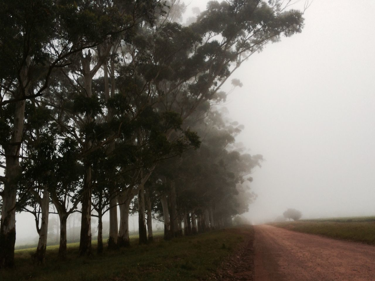 tree, fog, landscape, nature, road, the way forward, diminishing perspective, tranquility, scenics, outdoors, tranquil scene, day, beauty in nature, mist, no people, grass, sky