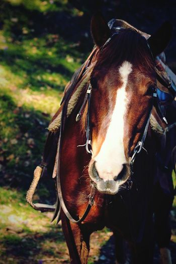 Horse Animal Photography Horse Photography  Equestrian Equine Western Horse Westernriding Equestrian Sport Equine Photography Riding Western Animal Pony