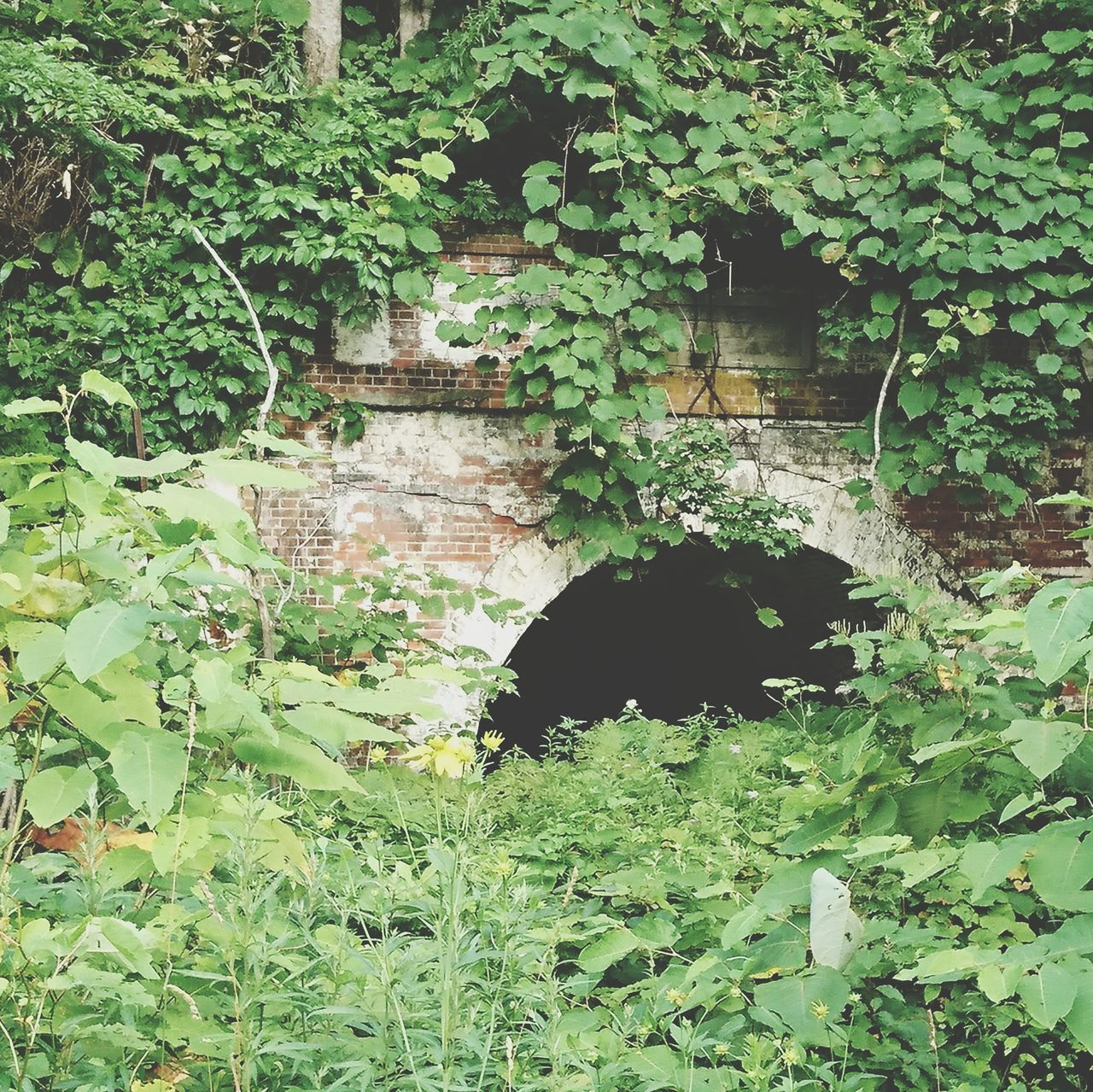 plant, growth, leaf, green color, ivy, creeper, outdoors, architecture, day, built structure, nature, creeper plant, no people, tree