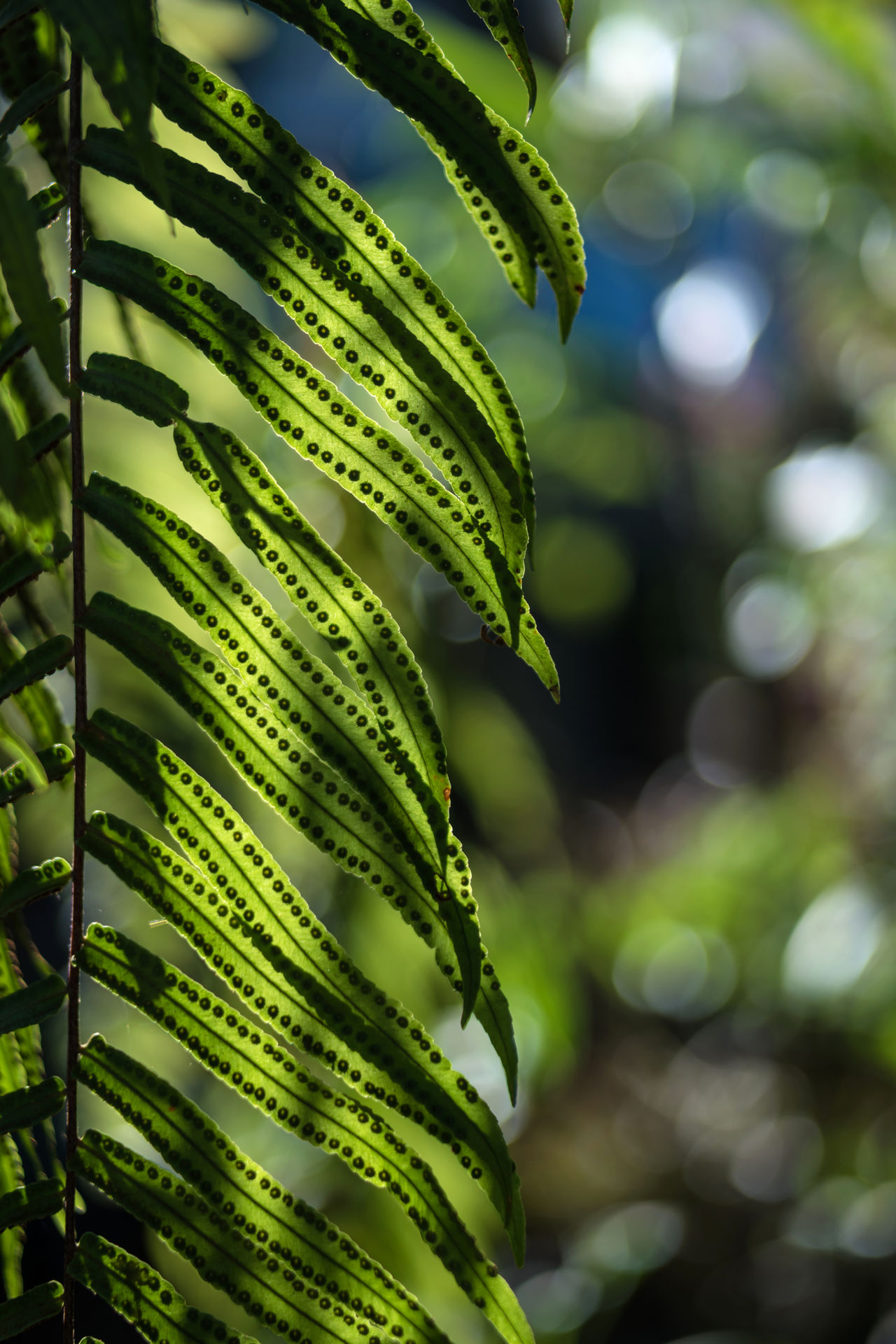 Beauty In Nature Branch Close-up Day Fern Fern Spores Freshness Green Color Growth Leaf Nature No People Outdoors Spores Spores On Fern Tree