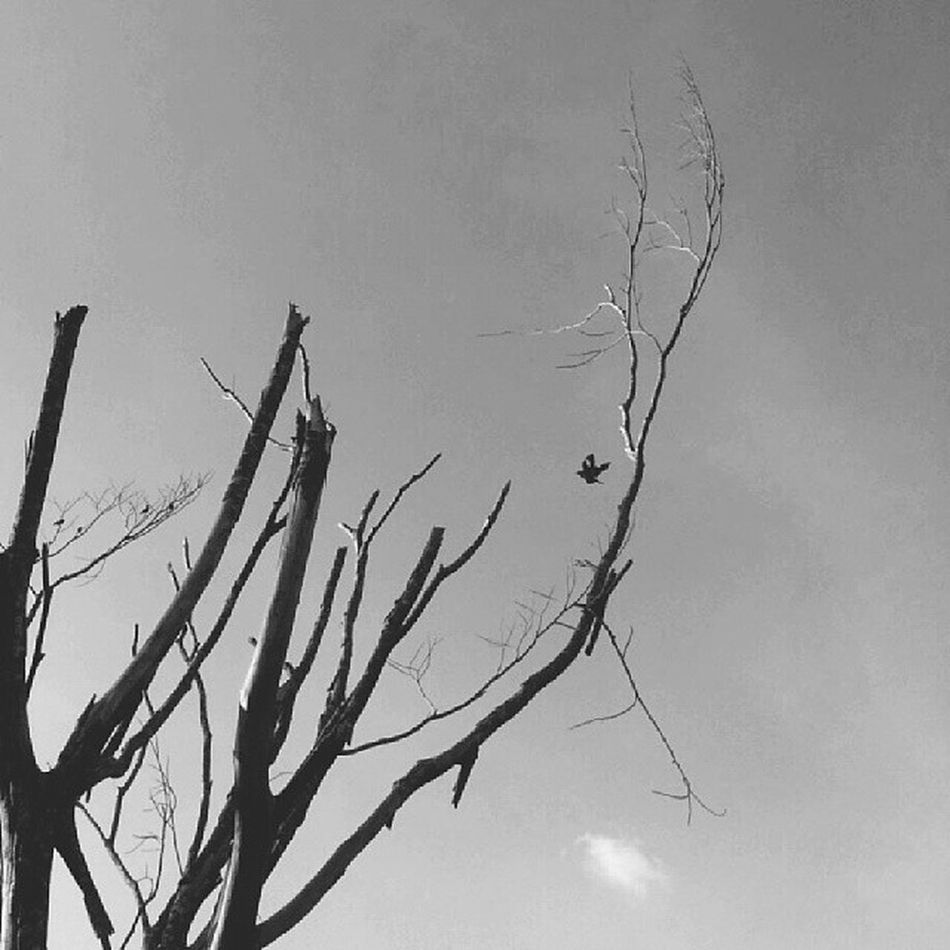 Monochrome Igfotogram_4bw Instasg