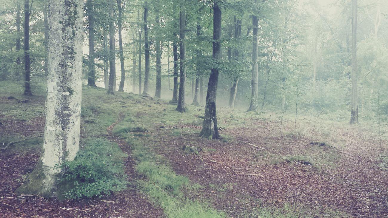 Bjärnum Skåne Sweden Tree Fog Foggy Foggy Forest