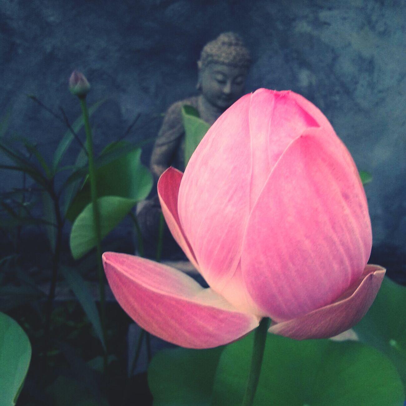 lokah samastha sukhino bhavantu Flower Lotus Bali Buddha