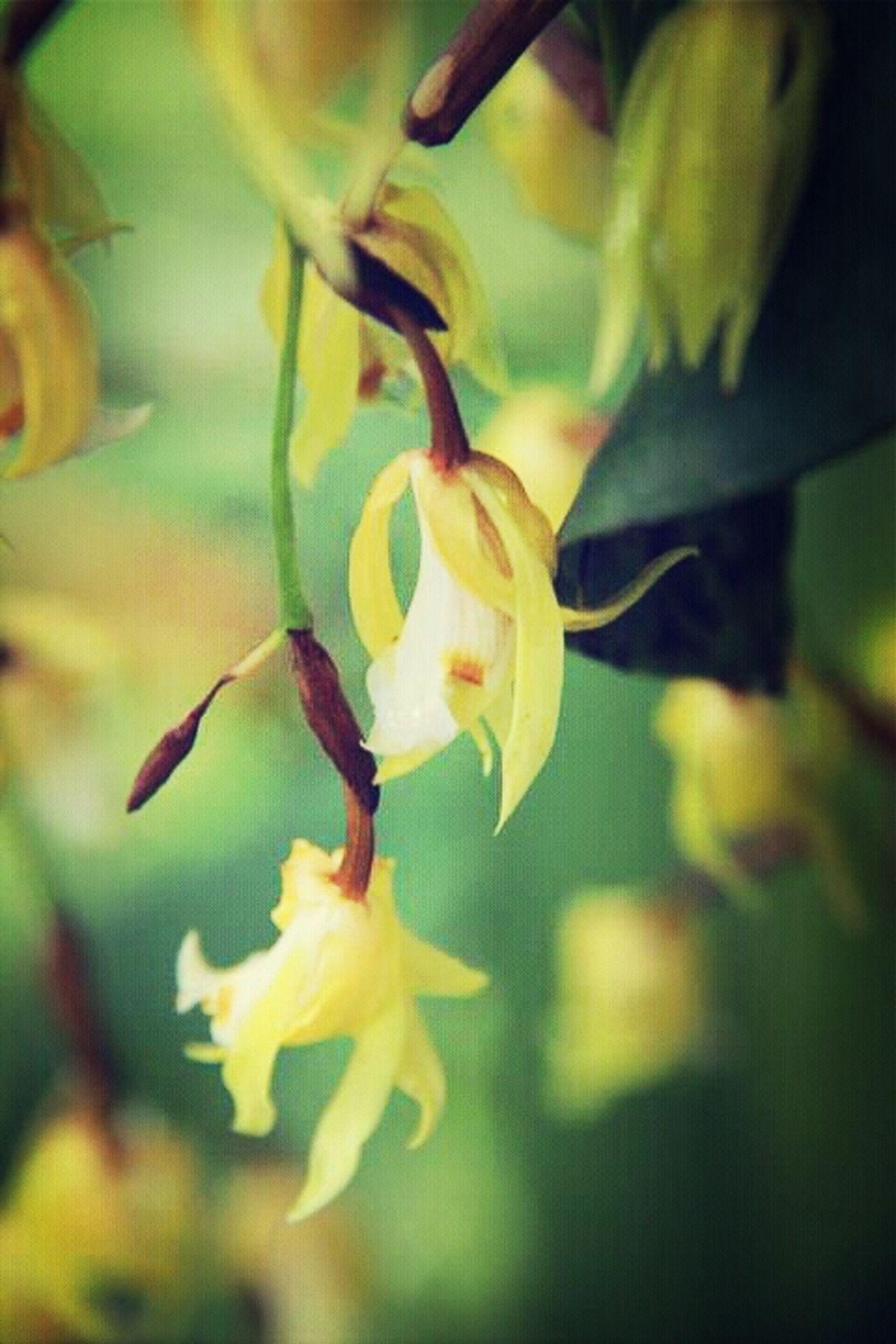 Flowers Nature Garden Urban Orchids