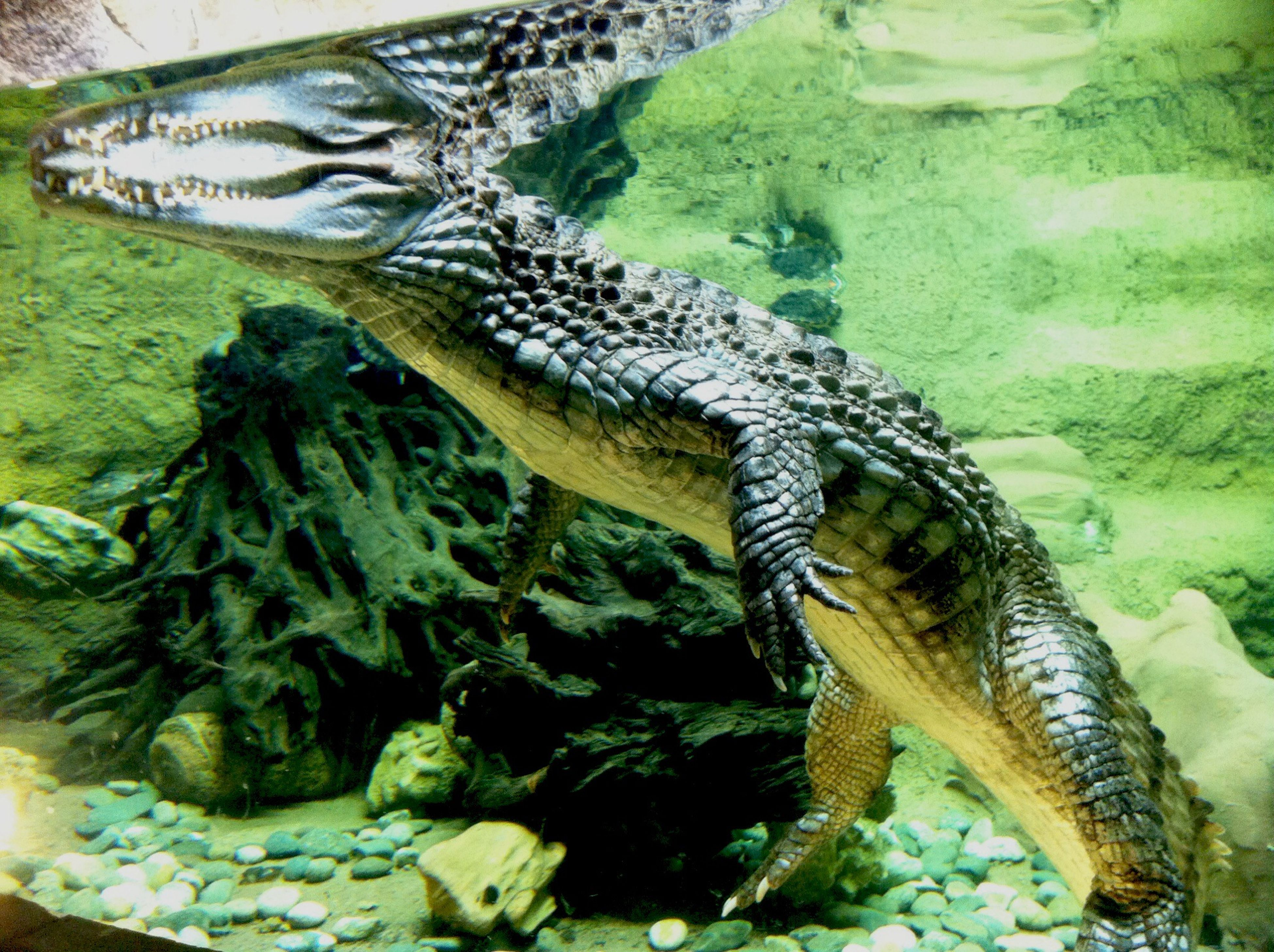 Крокодайл!!!😄 First Eyeem Photo